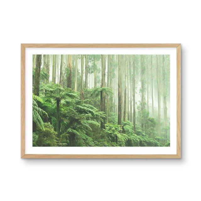 Misty Forest, Healsville Victoria (50×70cm)