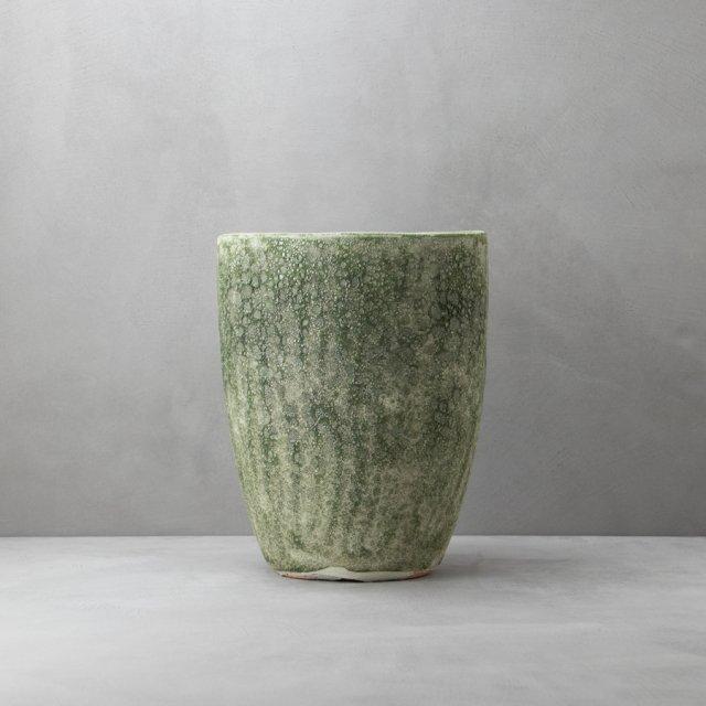 アビスソニア 28cm GREEN