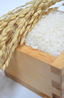 笛路村のおいしいお米(コシヒカリ)3kg