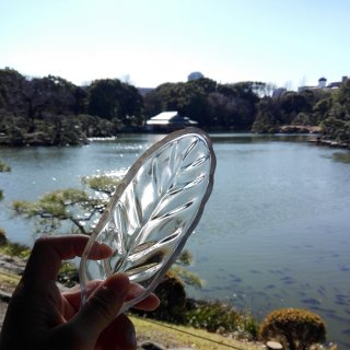 ガラスプレート 葉