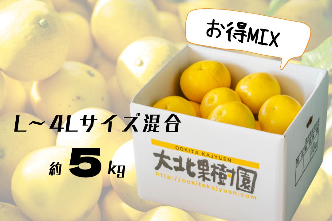 お得MIX 土佐文旦 L~4Lサイズ混合 約5kg (8~12玉入)