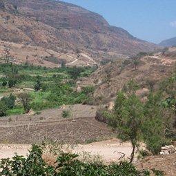エチオピア イースト・ハラー  ナチュラル シティロースト
