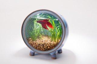 円型陶器水槽 -小 (青,白緑,赤,黒)-アクアリウム