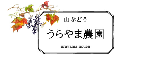 うらやま農園 山ぶどう栽培(山形県鶴岡市)