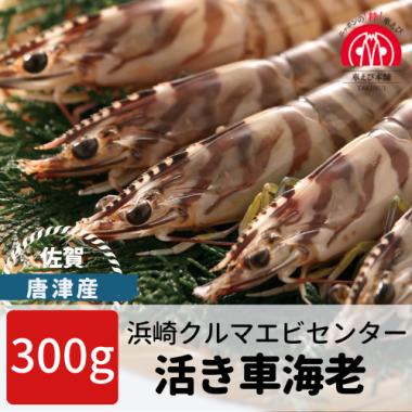 唐津産 活き車海老 300g(6-12尾)