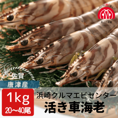 唐津産 活き車海老 1kg(20-40尾)