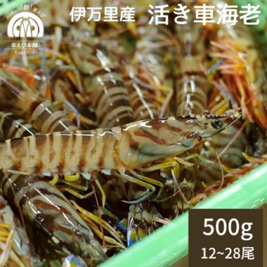 伊万里産 活き車海老 500g(12-25尾)