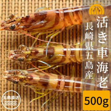 五島産 活き車海老 500g(15-25尾)
