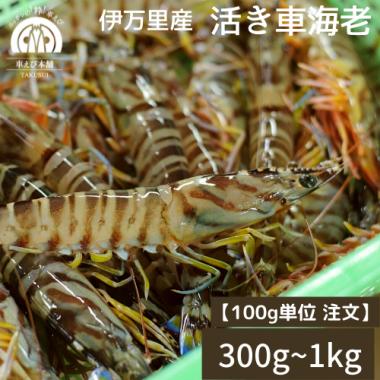 伊万里産 活き車海老 300g〜1kg