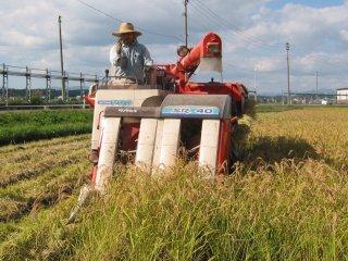 2020年産・農薬不使用栽培コシヒカリ・玄米30kg又は精米約27kg
