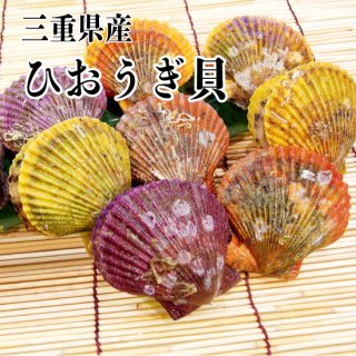 【冷蔵】三重県産 ひおうぎ貝 30枚