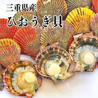 【冷蔵】三重県産 ひおうぎ貝 40枚