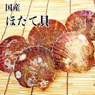 【冷蔵】ほたて貝 (10枚)