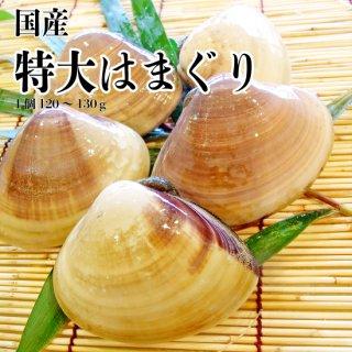 【冷蔵】国産 特大はまぐり (20個)