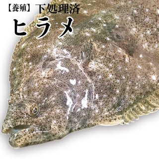【冷蔵】ヒラメ(養殖) 1000g〜