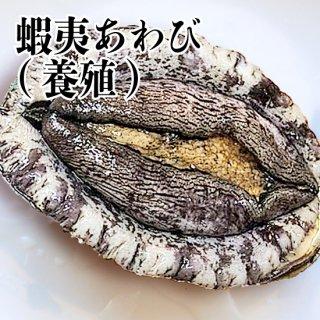 【冷蔵】蝦夷あわび(養殖) 120-130g