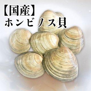 【冷蔵】国産 ホンビノス貝 4kg 27〜28個