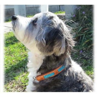 小型犬用手縫いナチュラルターコイスブレードカラー