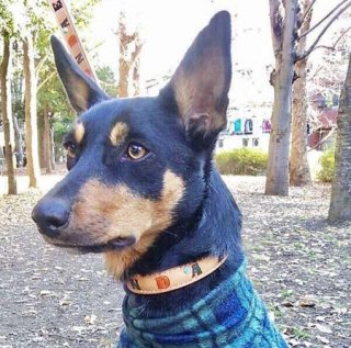 中型犬用ナチュラルビッグネームカラー