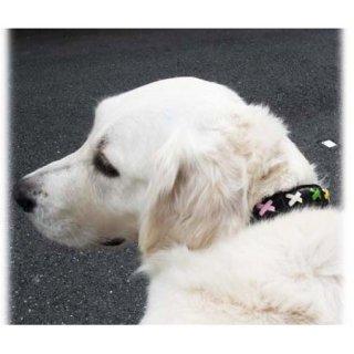大型犬用手縫いブラック×カラフルクロスカラー