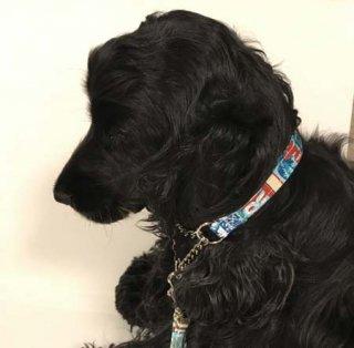 小型犬用クリームハワイ