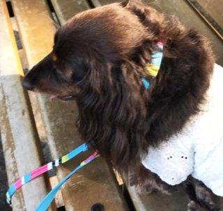 小型犬用ターコイス系マルチ