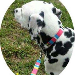 中型犬用ターコイス系マルチ