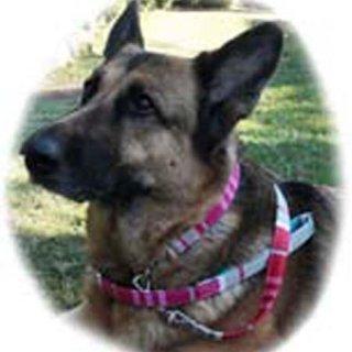 大型犬用レッドライトグレー系マルチ