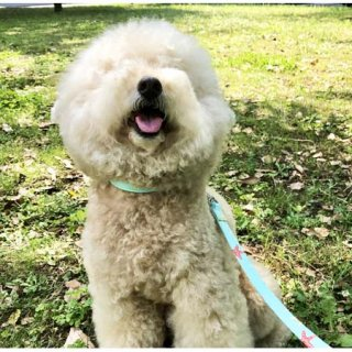 小型犬用ヒトデペパーミント
