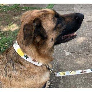 限定品:大型犬用 パイナップルリード&カラー