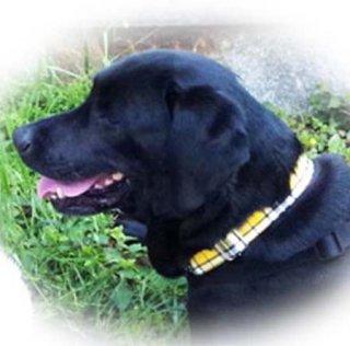 限定品:大型犬用 防水加工コットンリード&カラー