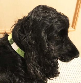 小型犬用ミントグリーン&イエロー系マルチ