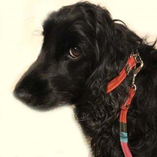 小型犬用レッド系マルチ