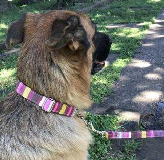 大型犬用ピンク&ボルドー系マルチ