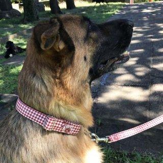 大型犬用ダークレッドギンガムチェック
