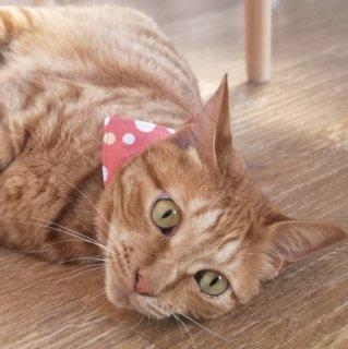 猫 首輪 バンダナ バブル サーモンピンク セーフティ猫首輪