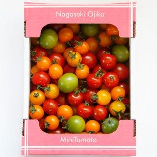 おぢかミニトマト 1�【りんたろうふぁ〜む】★常温発送・冷蔵可★
