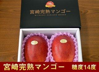 宮崎完熟マンゴー (いちまさ果樹園黒箱) 糖度14度