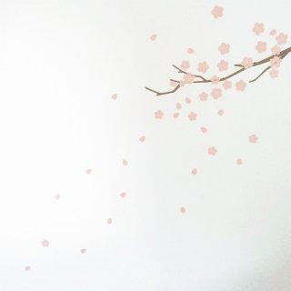 桜のウォールステッカー