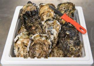 プレミアム殻付き牡蠣(厳選)50個