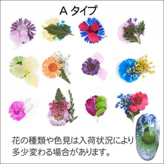 ネイル 押し花(ドライフラワー)Aタイプ 12色<br />◆<font color=blue>期間限定!20%off!</font>
