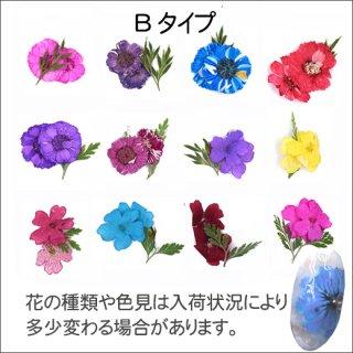 ネイル 押し花(ドライフラワー)Bタイプ 12色<br />◆<font color=blue>期間限定!20%off!</font>