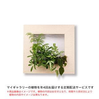 マイギャラリーM定期便【年4回お届け】/ホワイトウッド