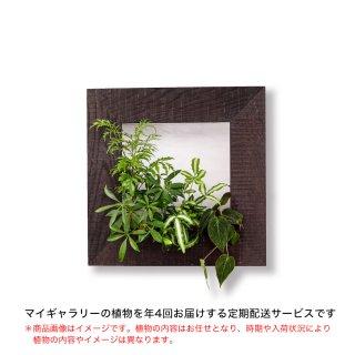 マイギャラリーM定期便【年4回お届け】/エボニー