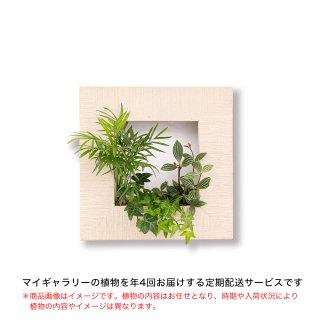 マイギャラリーS定期便【年4回お届け】/ホワイトウッド