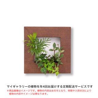 マイギャラリーS定期便【年4回お届け】/植物のみ