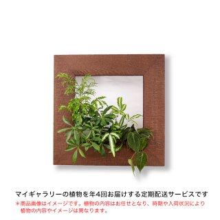 マイギャラリーM定期便【年4回お届け】/植物のみ