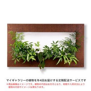 マイギャラリーL定期便【年4回お届け】/植物のみ