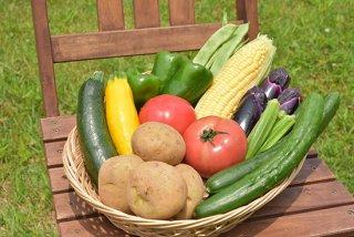 わくわくファームのお楽しみ夏野菜セット(クール便対応)※7〜9月限定商品