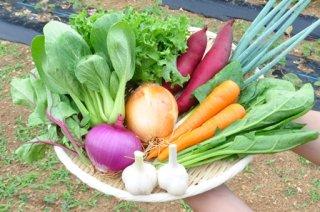 【有機JAS認証取得】 お任せ有機野菜セット(10種)